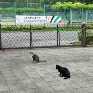 日本だから、できる。あたらしいオリンピック!