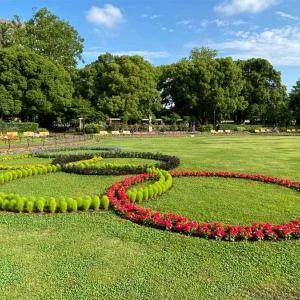 オリンピックシンボル花壇
