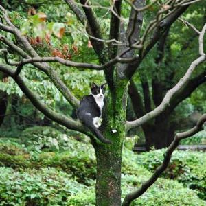 キャット Cat on Dogwood ドッグウッド (花水木)