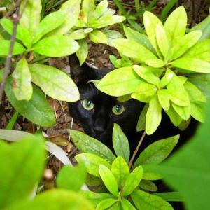 アイシーユー I see you