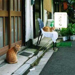 居酒屋「さくら」へ、いらっしゃいませ Welcome!