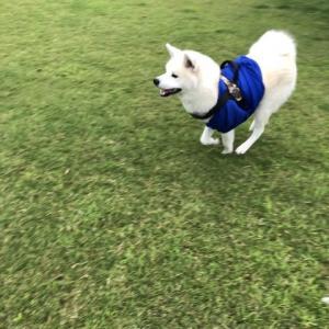 初の犬旅!凛太郎、滋賀へ行く!(1日目編)