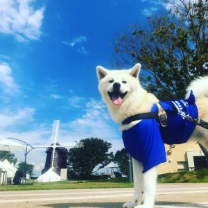 初の犬旅!凛太郎、滋賀へ行く!(2日目編)