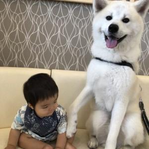 大型犬あるある?