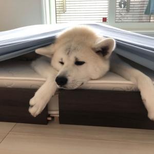 頑固者凛太郎がベッドを譲った理由