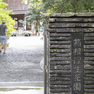 箱根湿性花園 初秋の箱根1泊旅_2020.09 ⑦