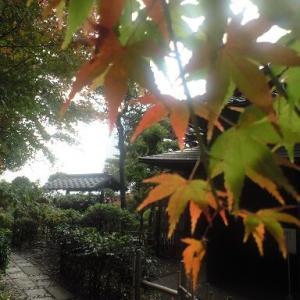 五島美術館(上野毛)