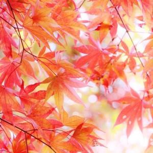 秋を表す色って何色?かさねの色目を解説!