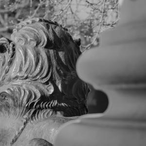 獅子の目線