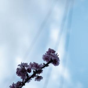 Spring has come...?