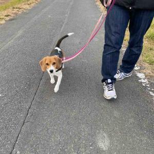 お散歩拒否犬と至福のお昼寝タイム