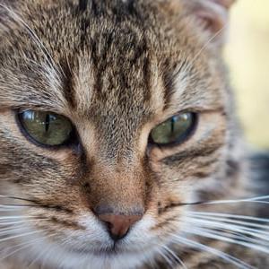猫の魅力、可愛い猫の遊ばせ方