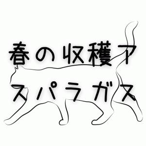 【ねこ姫】春の収穫【アスパラガス】