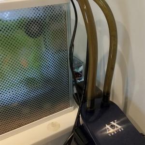 金魚水槽とキューブ水槽のお掃除&水替えの様子