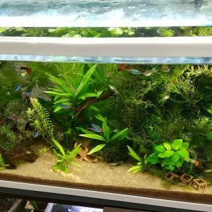 熱帯魚水槽の様子(2020年11月23日)✨