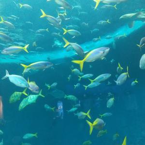 【水族館】鴨川シーワールドに行って来ました✨