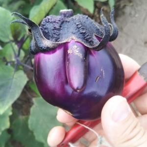 壮瞥おすすめ!夏野菜の中に驚きの○○が。。。。