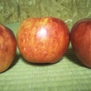 壮瞥おすすめ!リンゴの収穫をしました!お土産にどうぞ(#^.^#)