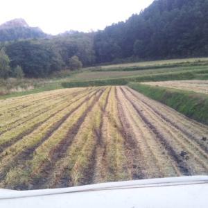 壮瞥おすすめ!今年のいこい農園稲刈りが無事に終了しました!!