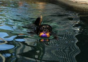 うちのワンコの泳ぎを見て