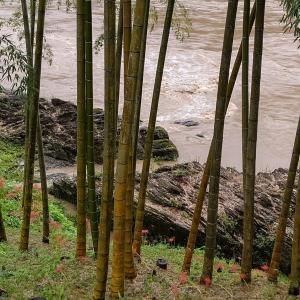 台風14号(チャンスー)通過後の宮川