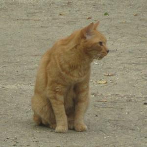 名城公園の6匹目野良ネコちゃん紹介