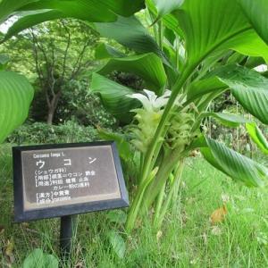 名古屋城の花たち