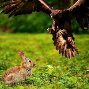 『二兎を追うものだけが、二兎を得る』