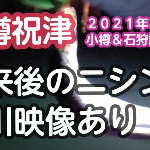 2021年2月21日 ニシン 小樽祝津・石狩樽川行ってきました【北海道】【釣り】