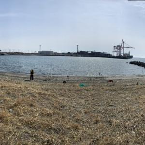 2021.3.13 苫小牧東港クロガシラ
