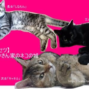 猫紹介「まみやさん家のネコの城!」登場にゃん物ご紹介します。