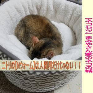 寒い季節の必死アイテム!ニトリ【Nウォーム】で猫用ベットがポカポカだったその実力