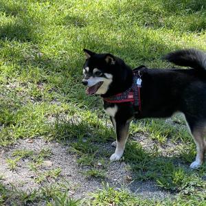 Romperdog Run&Site (3)