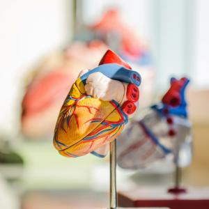 衛生管理者の過去問の出題傾向を徹底分析!労働生理【心臓・血液】編