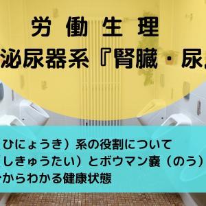 衛生管理者【労働生理】 泌尿器系『腎臓・尿』出題傾向を徹底分析!