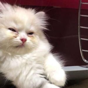 子猫の寝顔が可愛すぎる!