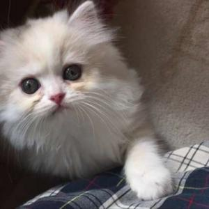 子猫ヒミコがお気に入りの3つの場所
