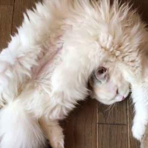 やっぱり猫は液体