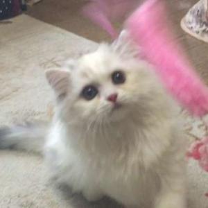 【猫じゃらし】猫によって遊び方が違う!
