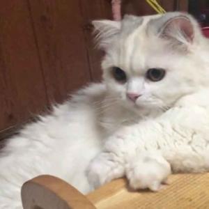 猫が始めたオンライン悩み相談がSNSで話題に…ダイエットに悩む女性の救世主となれるのか?