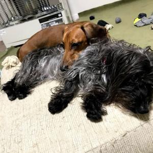 犬と暮らすために、まずは犬が入れる場所を分ける