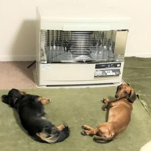 犬がいつも寝ているのは、暇だから?