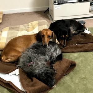 和室に犬のケージを置く。畳を守るために、やってみた対策とは?