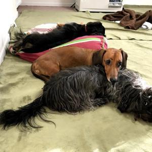 【仔犬が家具を噛むとき、対策に使ったものとは?】チューブのわさび、そしてしつけスプレーまで