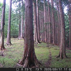 トレイルカメラで猟場の下見をするのは楽しい