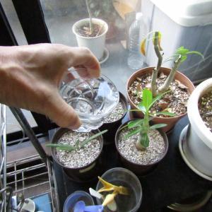 飼育水を植物栽培に活用!