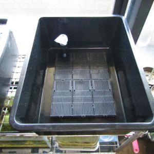 「角型タライ」 新規水槽を立ち上げました!
