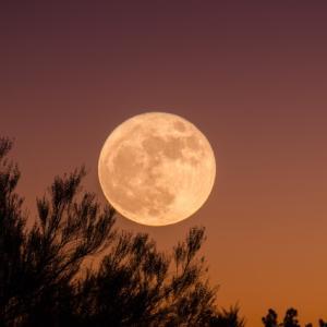 【秋の収穫に感謝】中秋の名月ですすきを飾る意味知ってますか?