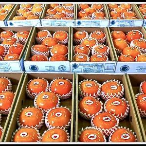 地球(日本)🌎の真裏:ブラジルで...『柿(Caqui)祭り』...=異次元空間との遭遇=