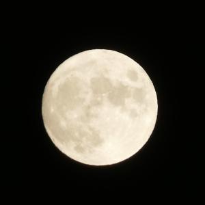 お月見で枠にとらわれない愛を循環させましょう♡魚座の満月〜ツインレイ・Tamaki Style〜